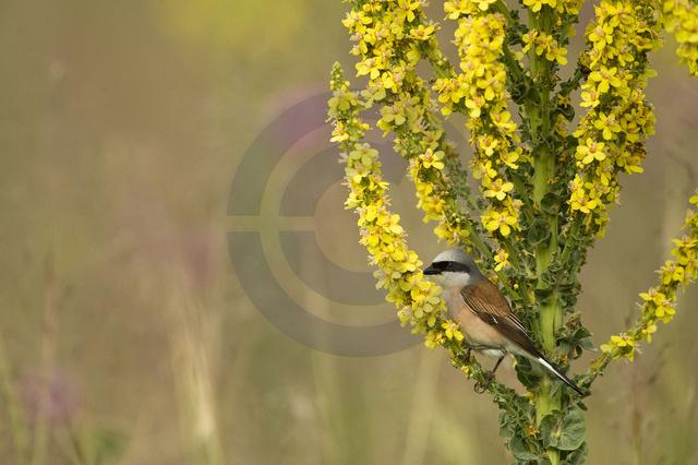 Tiere-Vögel-30.jpg