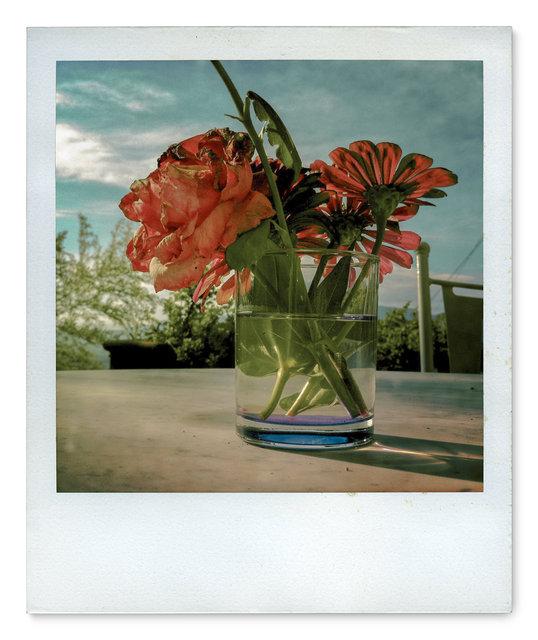 011_Polaroid SX70_IMG_2388.jpg