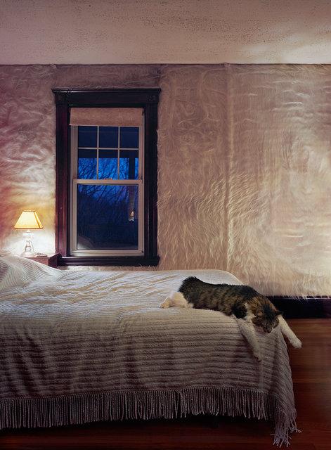 Untitled Interior (fur wall), 2012