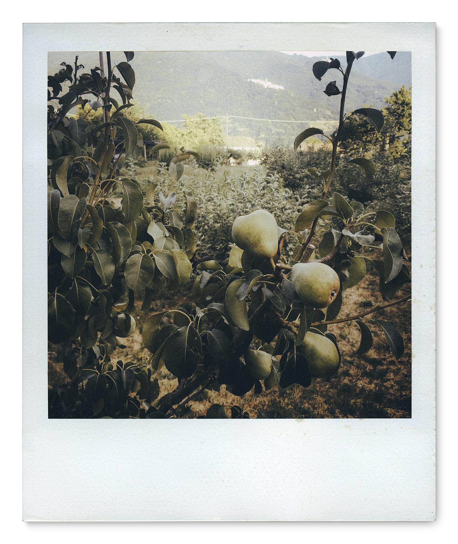 051_Polaroid SX70_IMG_2567.jpg