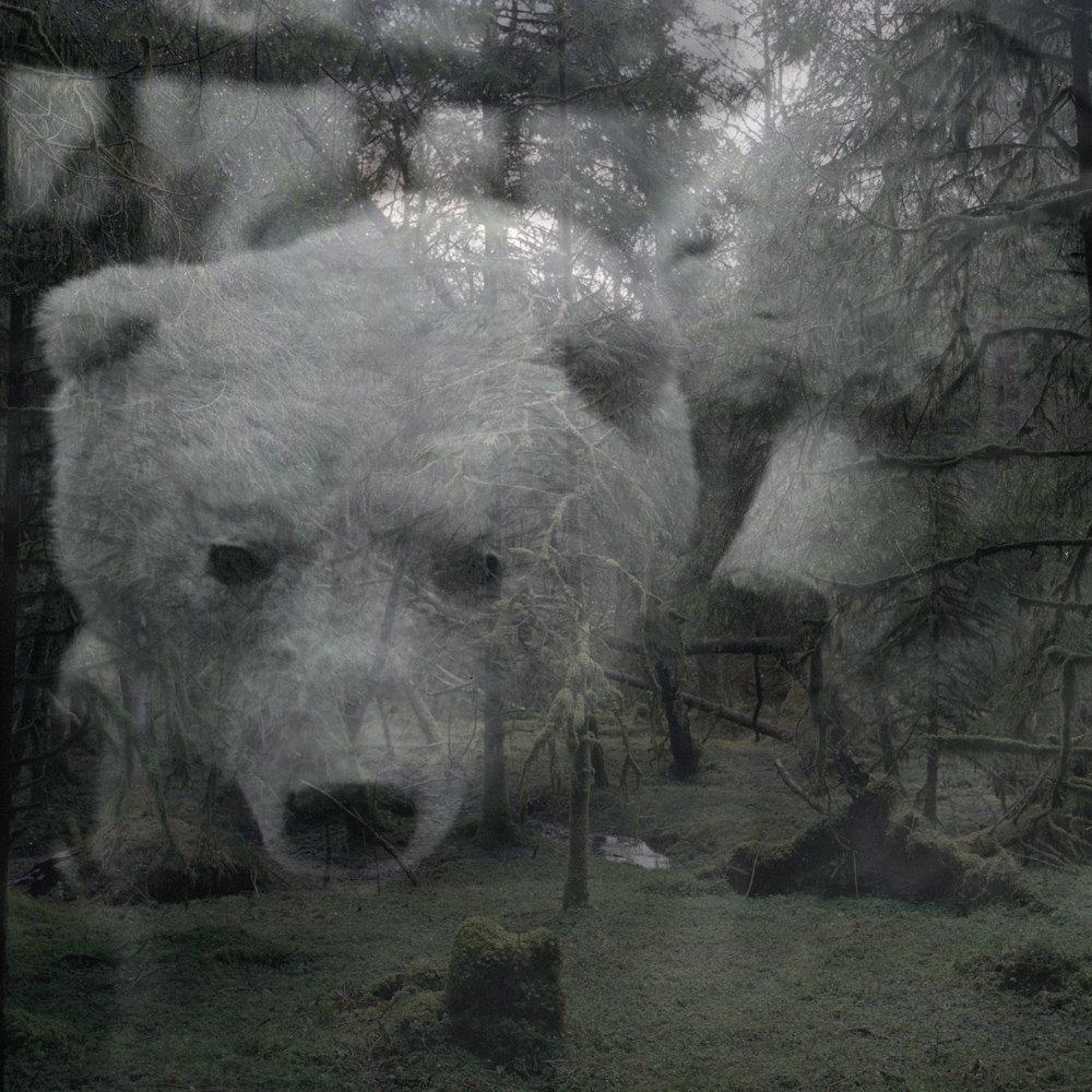 Scotland_2012_05_bears.jpg