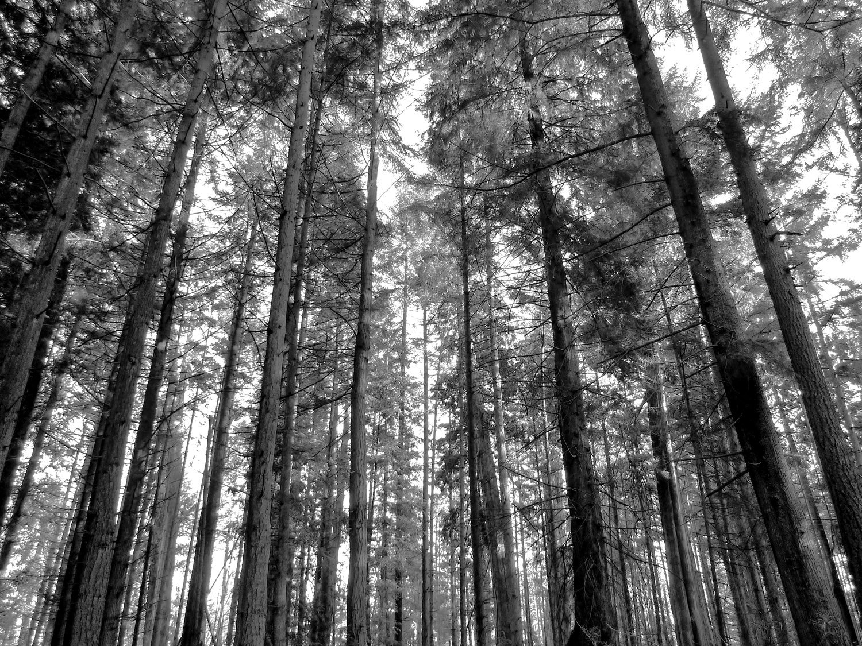 Tree-bw52.jpg
