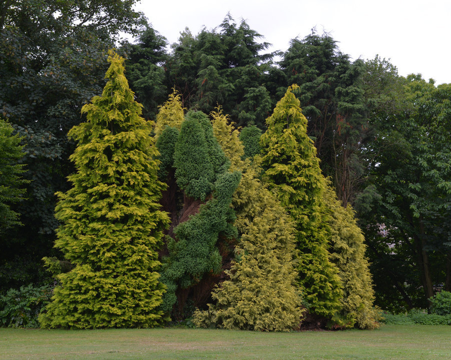 Trees 2, Government House Garden, St Saviourjpg.jpg