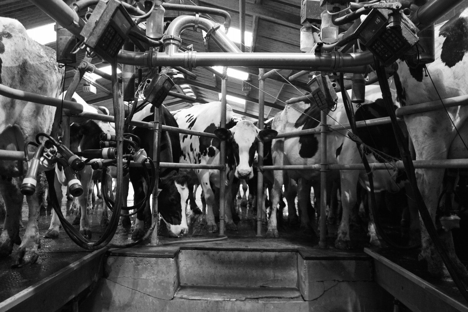 Milking Pit, Bosley Mill Farm, Gloucestershire.jpg
